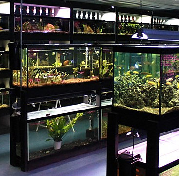 aquarium store omaha make your dream aquarium a reality